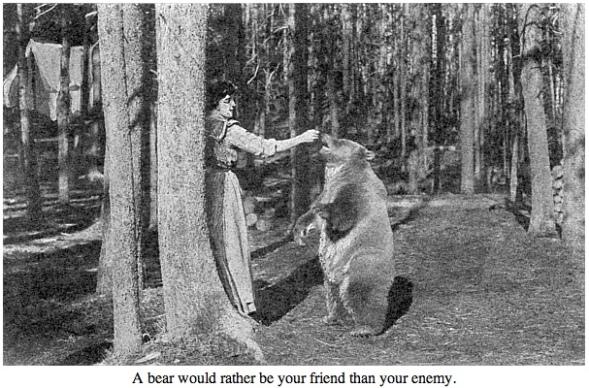 Bear behaviour