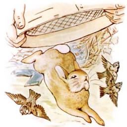 Beatrix Potter Peter Rabbit 2